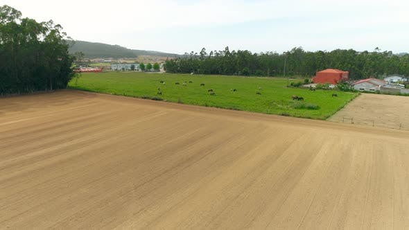 Thumbnail for Aerial Drone View of a Herd of Horses