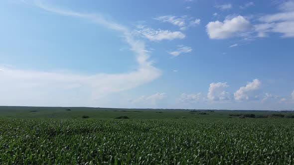 Farmland In Summer Day On A Background Of Blue Sky