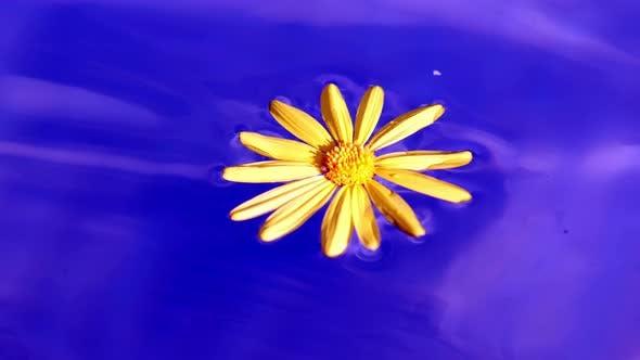 Liquid Yellow Flower In Blue Water