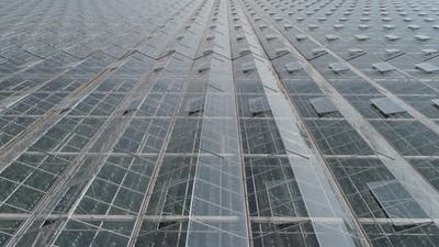 Flying Over Glass Greenhouses Growing Plants in Large Industrial Greenhouses View From a Height