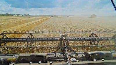 Harvesting wheat field. Harvesting machine working in the field