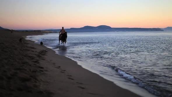 Thumbnail for Man Horse Riding At The Beach