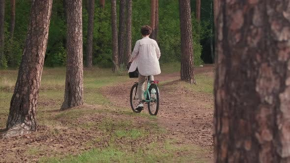 Back-View Of Family Riding Bikes In Forest