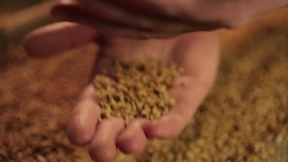 Thumbnail for Promotional Campaign for Agricultural Company, Human Hands Pouring Wheat Grain