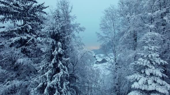 Thumbnail for Winter Wonderland Forest Trees Covered with Snow
