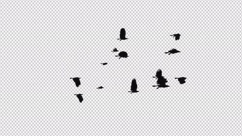 Raven Flock - 13 Birds - Flying Loop II - 4K