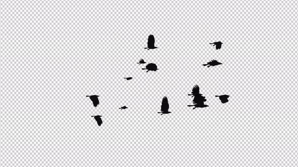 Raben Flock - 13 Vögel - Flying Loop II - 4K