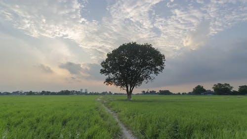 Timelapse sunset over lonely tree