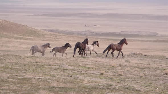 Thumbnail for Group of wild horses running in the distance.