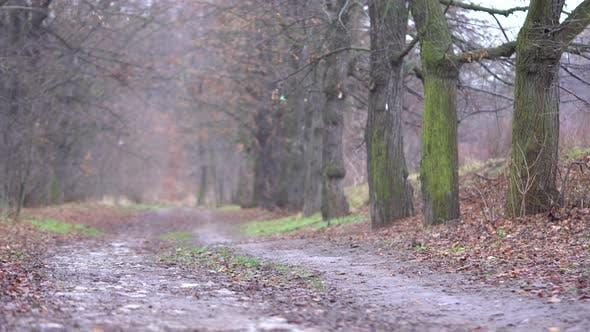 Muddy Pathway Through a Rural Area