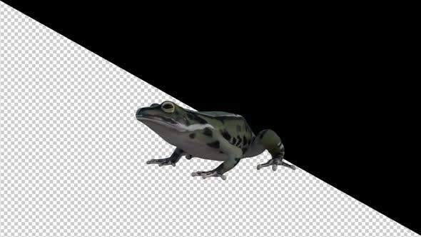 Thumbnail for Frog İdle Loop