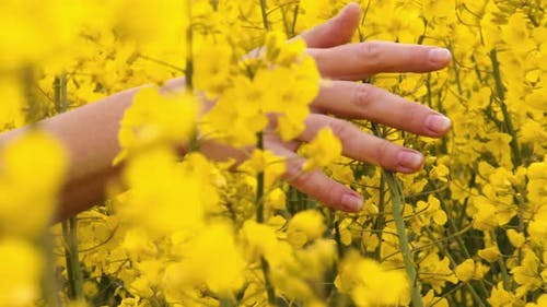 Dainty Hand Hovering on a Field of Yellow Flowers