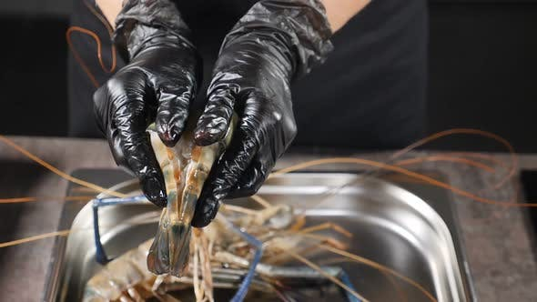 Thumbnail for Giant Freshwater Prawn Cooking. Macrobrachium Rosenbergii. Chef Hands in Black Gloves Opening Shell