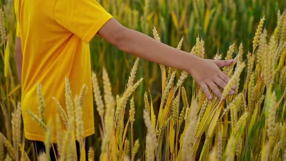 Thumbnail for Child in yellow t-shirt on wheat field