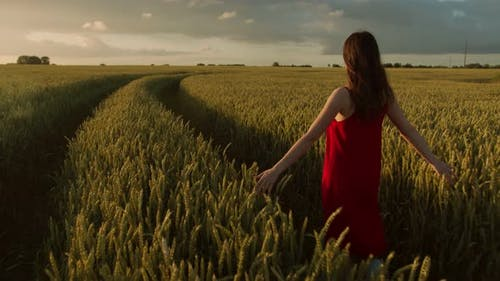 Beautiful Woman in a Red Dress Walks Across the Field of Ears