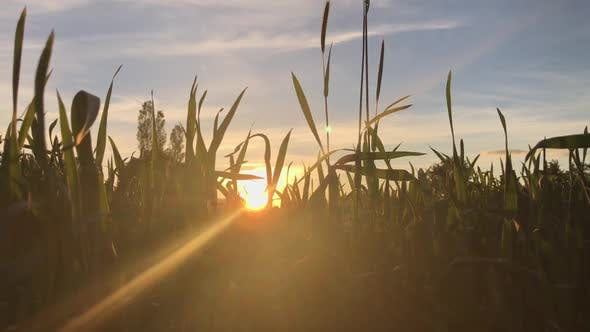 Thumbnail for Grass And Sun