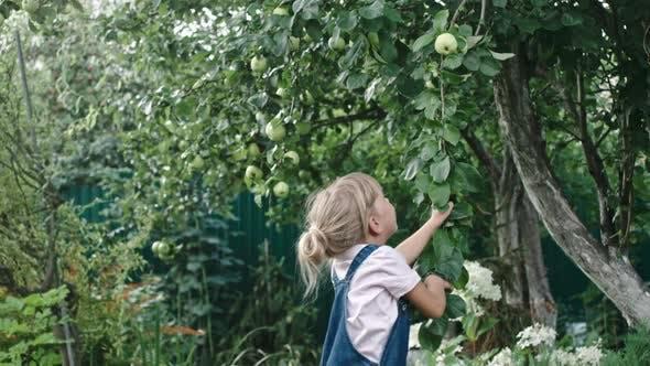 Thumbnail for Little Girl Reaching for Apples in Garden