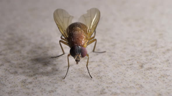 House Fly Moving