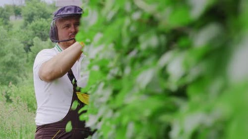 Man Cutting Hedge with Electric Trimming Machine