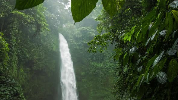 Thumbnail for Tropical Waterfall Hidden in Lush Jungle Green. Green Leaves Motion By the Wind Breeze. High
