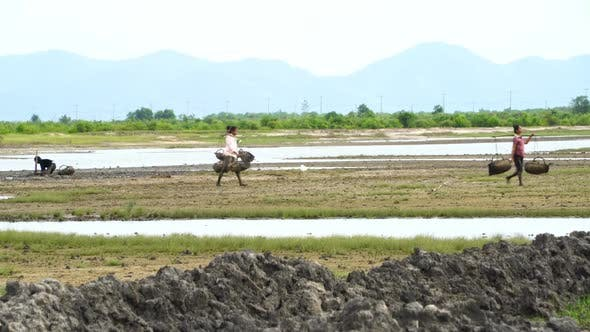 Thumbnail for Rice Fields