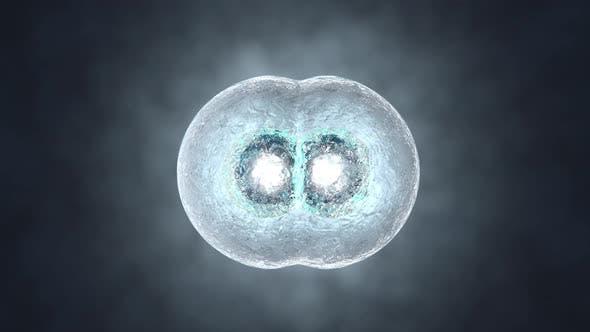 Animation 3D rendue de la réplication de cellules