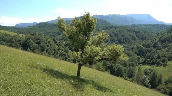 Thumbnail for Mountain Tree