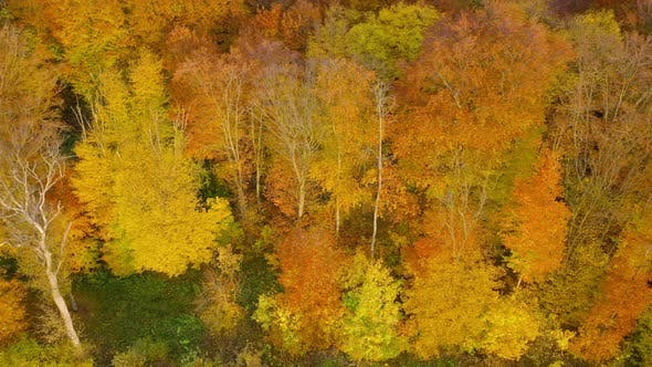 Thumbnail for View From the Height on a Bright Autumn Forest
