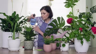 Indoor Houseplants in Pots
