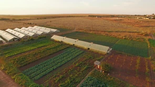 Thumbnail for Agricultural Field With Greenhouses Plantations At Sunset