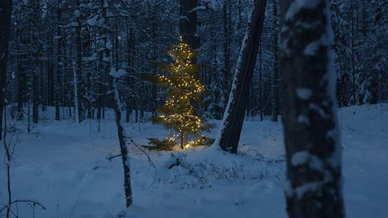 Thumbnail for Decorated Christmas Tree With Lights in Forest