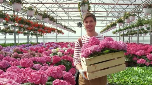Portrait of a Smiling Florist Carries Flowers on a Tray in a Greenhouse