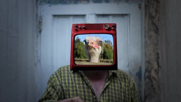 Thumbnail for Retro TV with Ostrich on the Head of a Man.