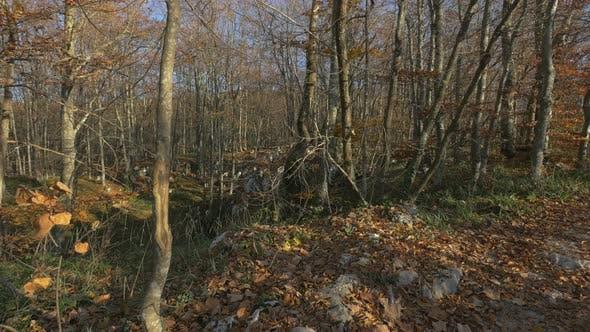 Thumbnail for Ein Herbstwald