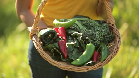 Thumbnail for Close-up of basket of vegetables held by woman