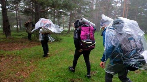Walkers Walking In The Rain Forest