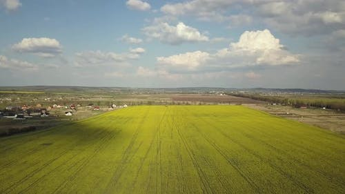 Aerial view of bright green agricultural farm field with growing rapeseed plants and distant