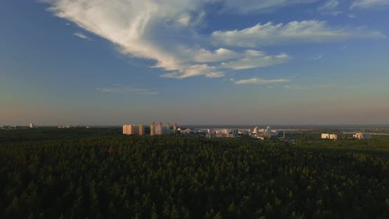 Flying Drone Over a Pine Forest During Sunset, Clear Blue Sky Against the Backdrop of the City