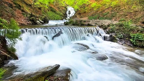 Water Falls Over Rocks Through the Dense Fern Undergrowth of a Carpathian Forest.