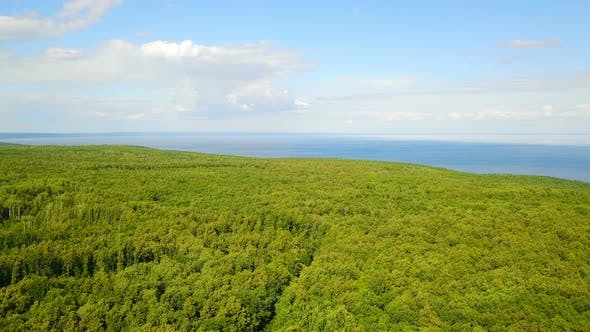 Cover Image for Forest Near Sea