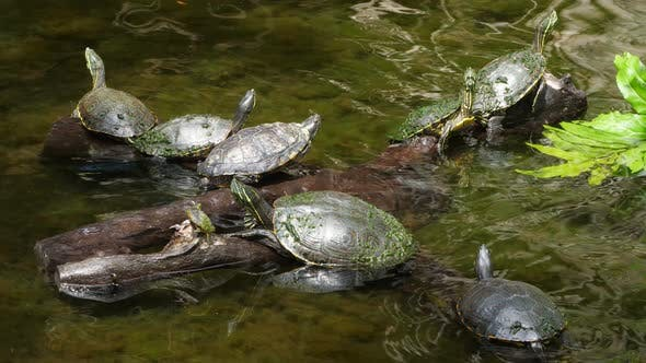 Thumbnail for Sea Turtles Swimming in the Cenote in Mexico