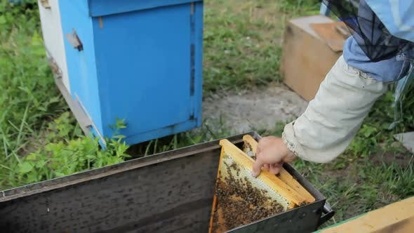 Beebee Hives in the Garden Apiary