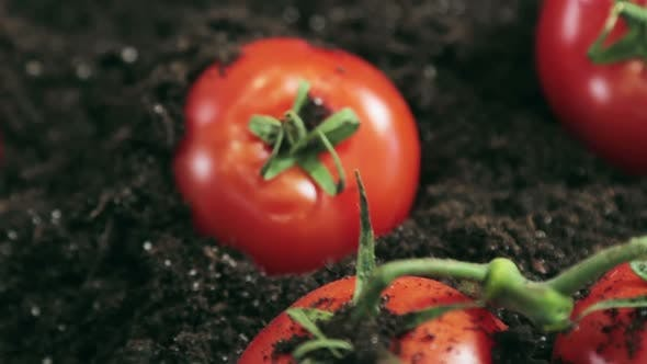 Thumbnail for Ripe Tomatoes on the Ground Against
