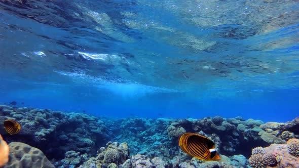 Wellen und Korallenriff
