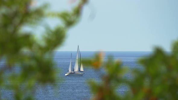 Cover Image for View Through Tree Branches To the Yacht Sailing in Sea