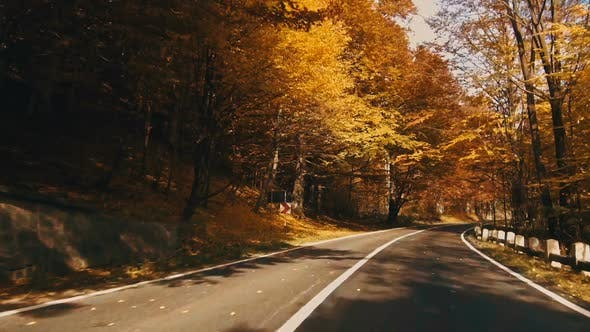 Thumbnail for Autumn Foliage in Forest with Road