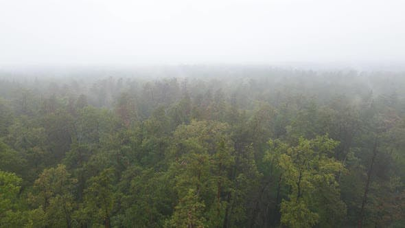 Thumbnail for Forest in Fog in Rainy Autumn Weather. Ukraine. Aerial View, Slow Motion