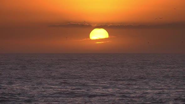 Thumbnail for Seagulls Fly Over Sea Against Sunset, Timelapse