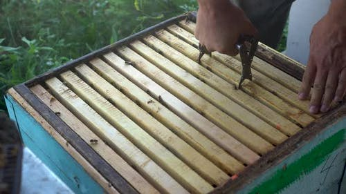 The Beekeeper Takes Out a Frame of Honey From the Hive. The Man Takes Care of the Bees.