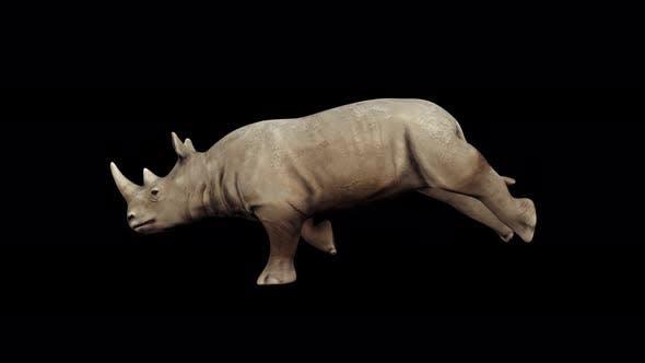 Thumbnail for 4K Rhinoceros Run